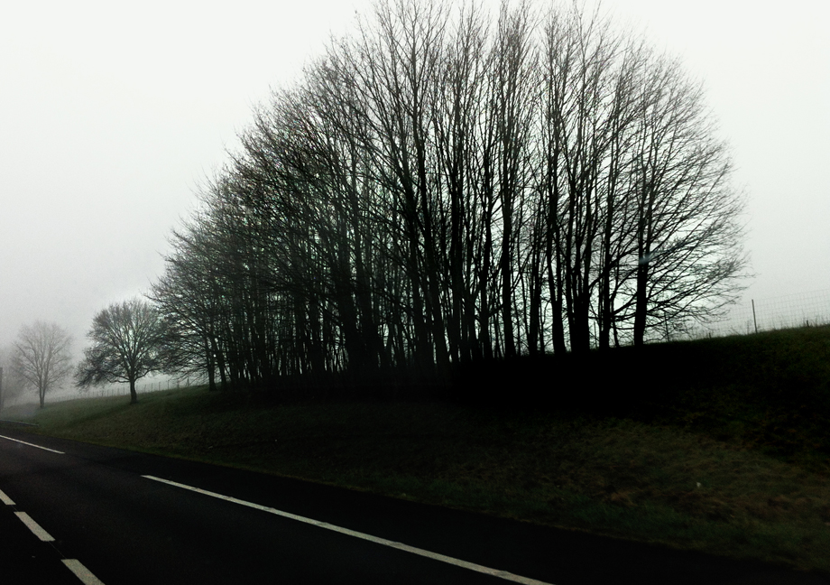 arbres noires